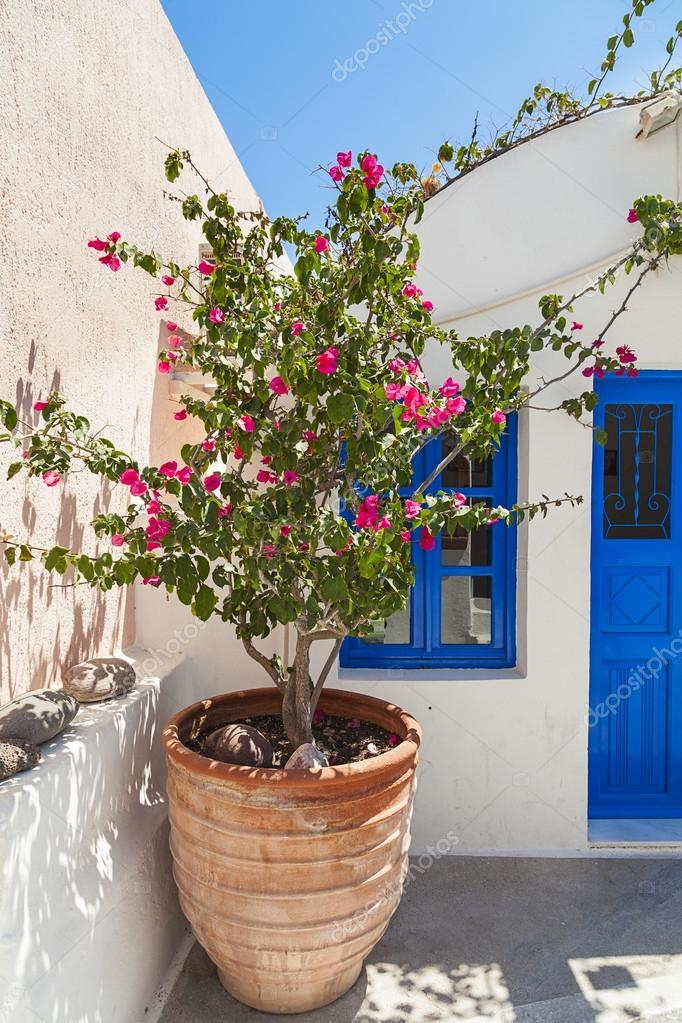 pot de fleurs grec traditionnel avec des bougainvilliers le de santorini gr ce photographie. Black Bedroom Furniture Sets. Home Design Ideas