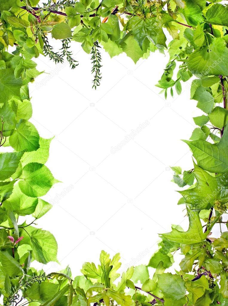 Marco de plantas verdes foto de stock postolit 12814758 - Marcos para plantas ...