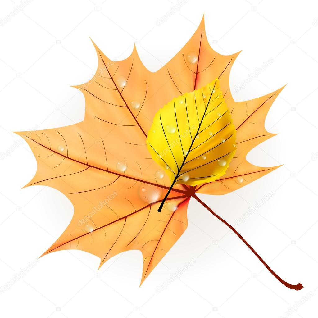 Autumn leaf isolated on white. plus EPS10