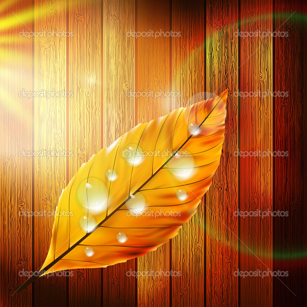 Autumn Leaf template. plus EPS10