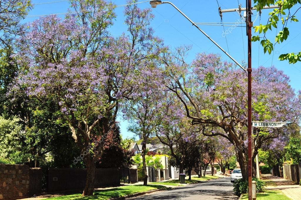 Little suburban street full of green trees. Adelaide, Australia