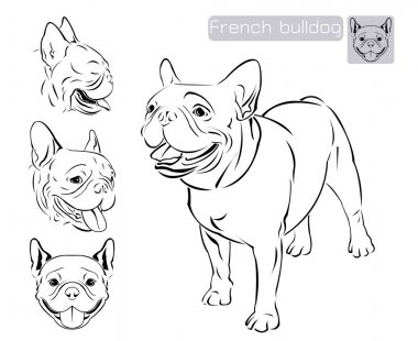 Line art of French bulldog