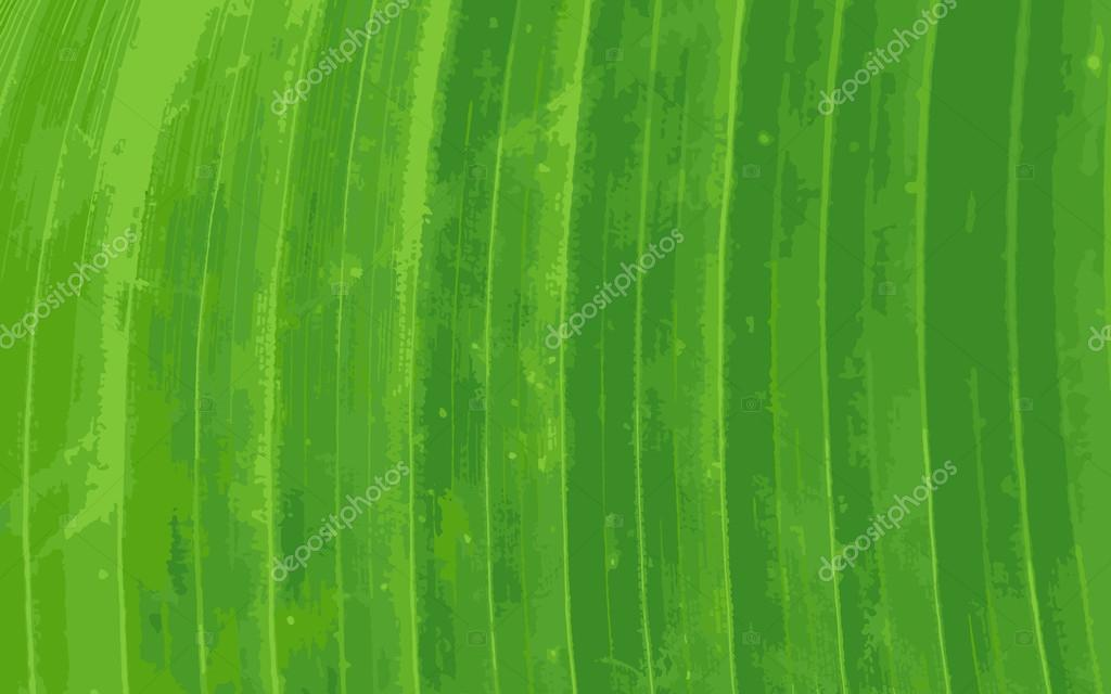 Pattern of green banana leaf background