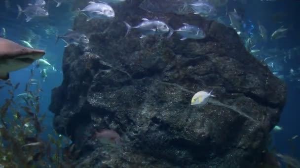 víz alatti cápa