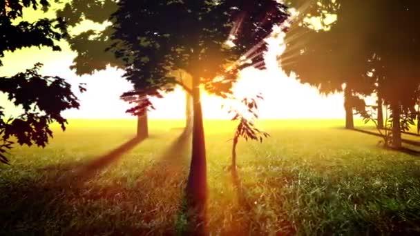 Sunny stromy smyčka