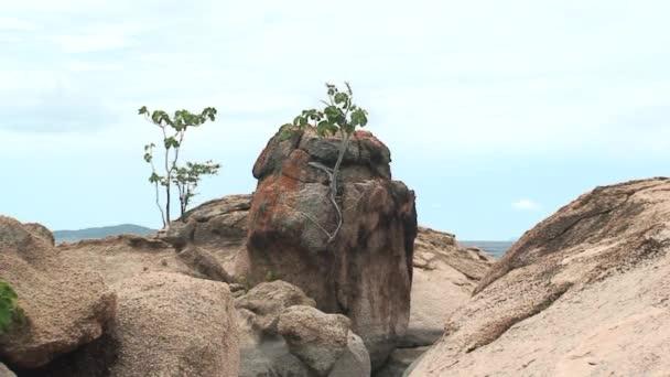 Malawi: trees growing on a rocks 1