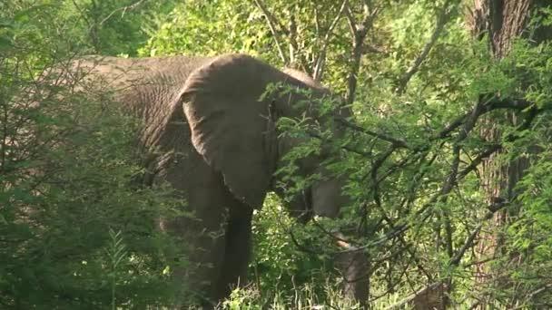 Malawi: elephants in the wild 1