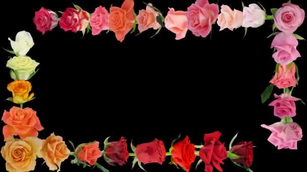 Montázs nyitó színes rózsák idő-lapse alfa Matt 7AA