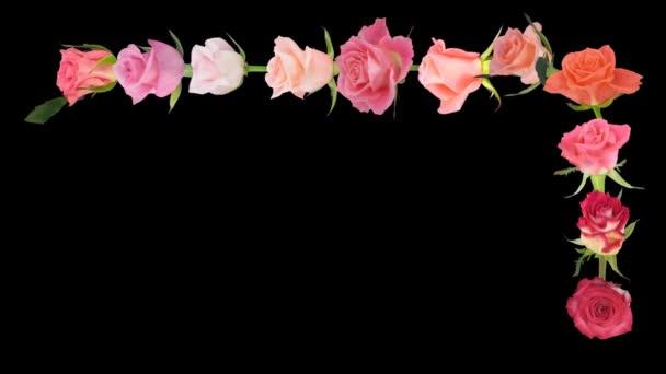 Montázs nyitó színes rózsák idő-lapse alfa Matt 7c1