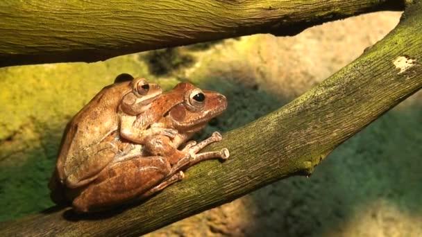 Přeprava dvou tropických žabek