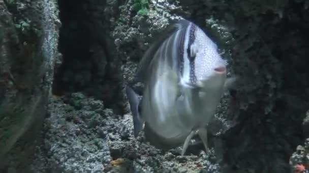 Single fish, close-up