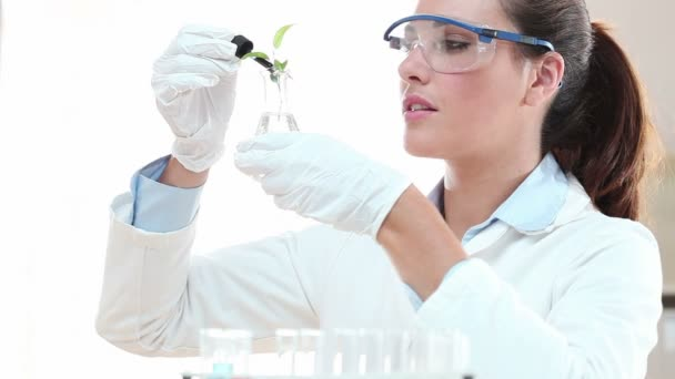 studentské tvorby testu s rostlin