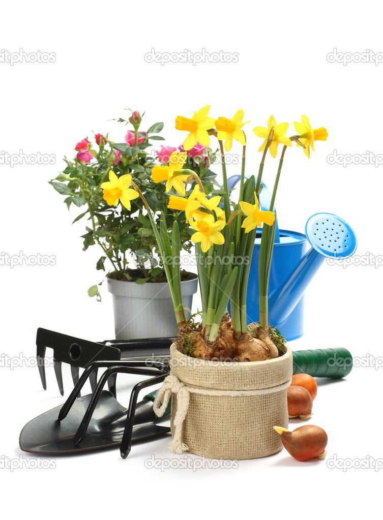 Attrezzi da giardinaggio e fiori isolati su bianco foto for Giardinaggio e fiori