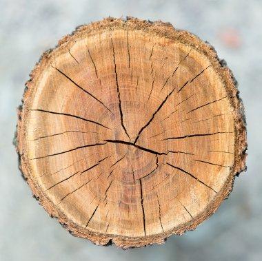 Wood circle texture