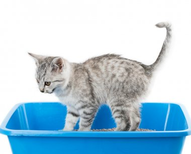 cat toilet