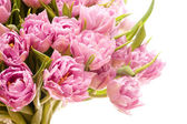 krásné fialové tulipány