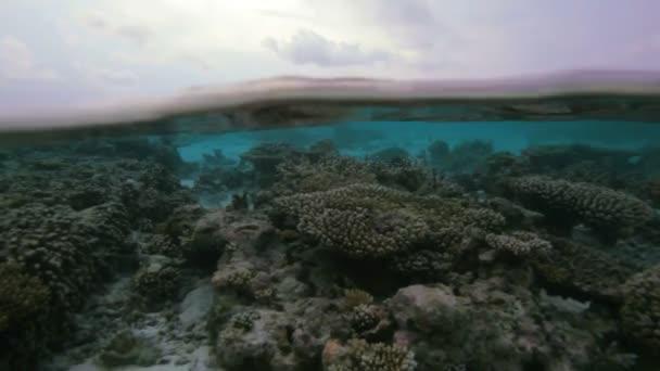 Semi-underwater video of tropical island, Maldive