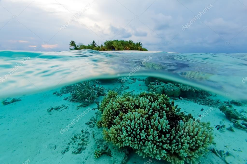 Semi Underwater Scene of Island and Reef
