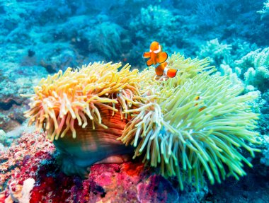 Tropical Fish near Colorful Coral Reef