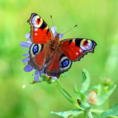 Closeup of Red Butterfly