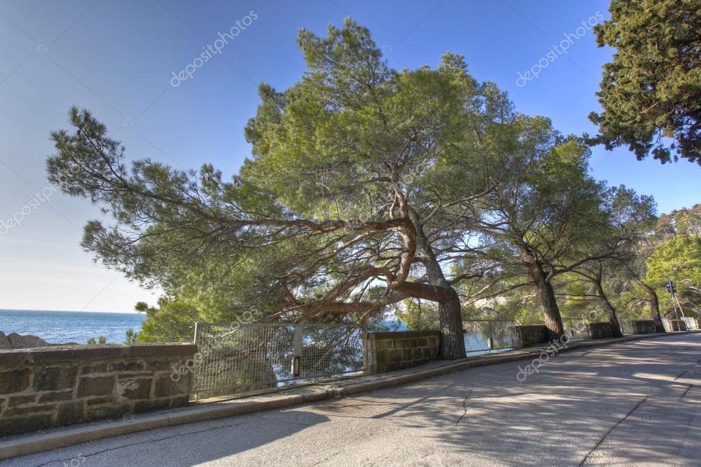 street on the sea with trees