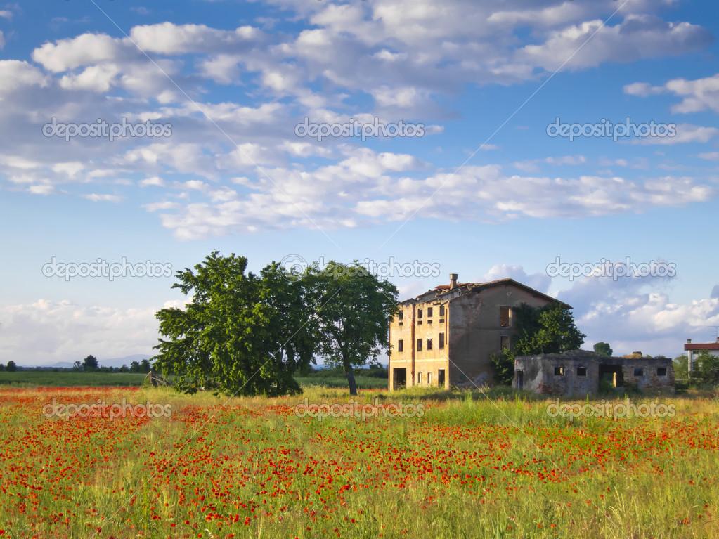 Paesaggio pittoresco di un campo di papaveri e una casa di for Disegni di cabina di campagna