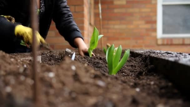Children plant some Spring flowers outside the house