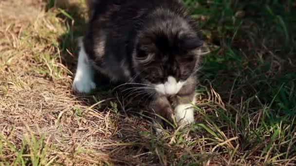 kočka si hraje s trávou