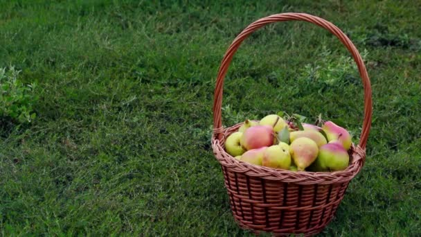 Bio jablka a hrušky v košíku venkovní