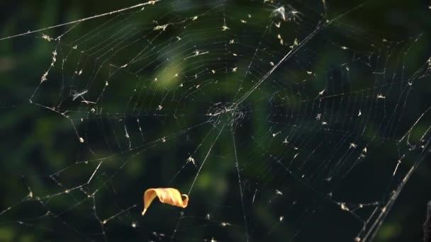 Cobweb against dark green background