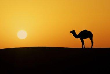 Camel silhouette alone