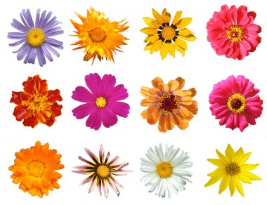 Various flowers Isolated