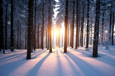 Sunset in the wood in winter