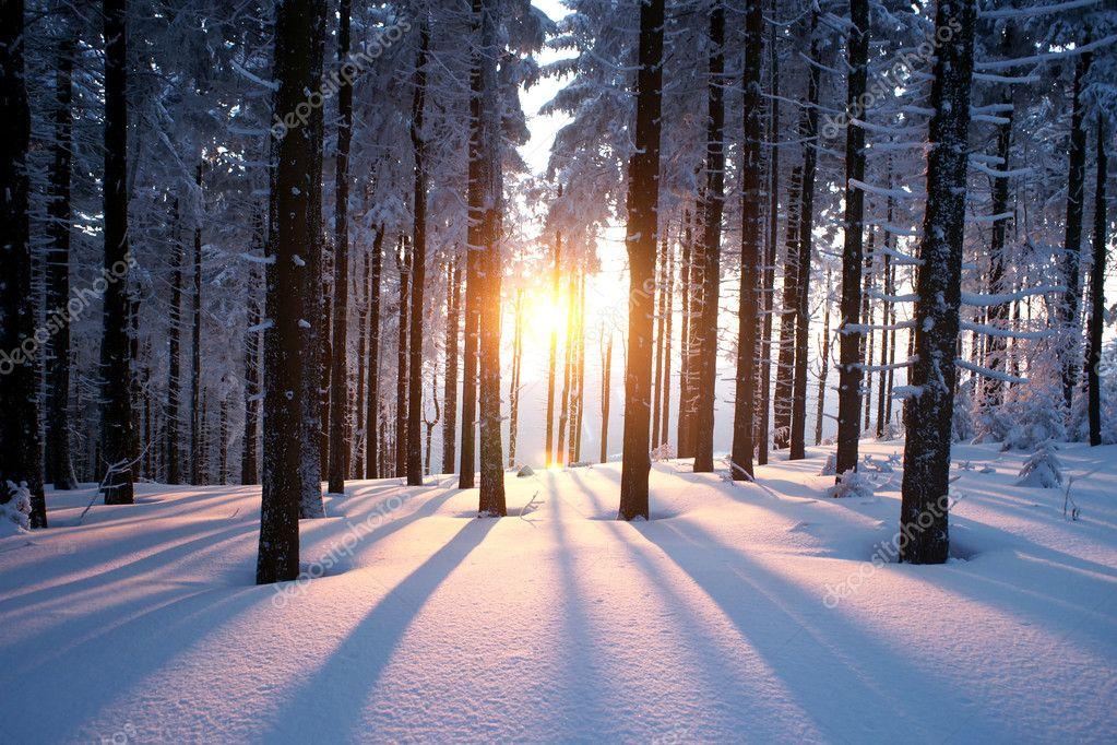 Фотообои Закат в лесу зимой