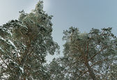 strada di neve inverno russo forestale