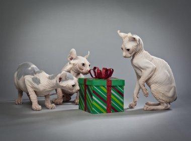 hairless christmas cats
