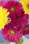 919 cropped image of pink and yellow daisies