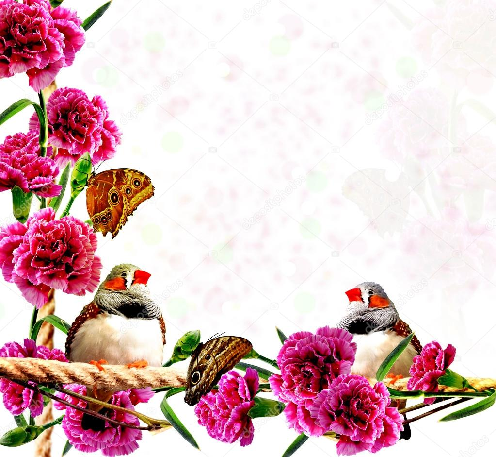 Background of flowers, butterflies and birds