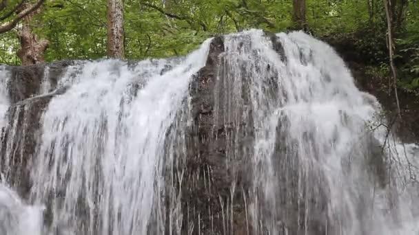 erdő zuhatag