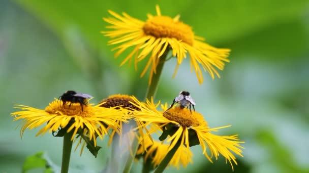 včely opylují žlutá kytice