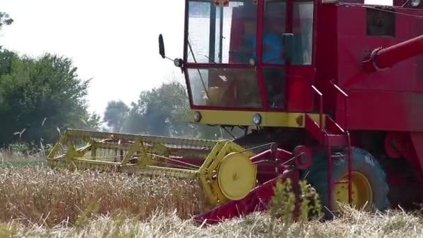 kombajn v poli pšenice