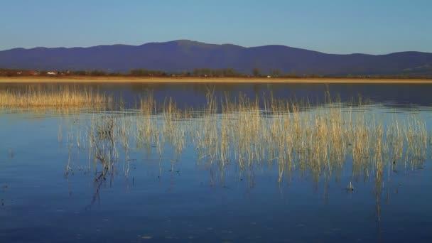 vlnící se jezero povrchu, reed rostlin