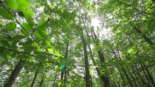 tlusté listnatý les