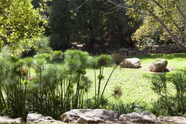 Green meadow in the garden of the the Jerusalem Biblical Zoo