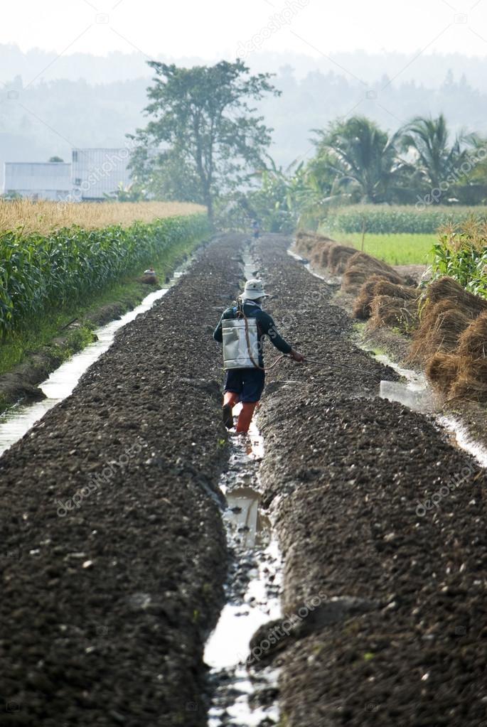 Farmer spraying pesticide on corn field