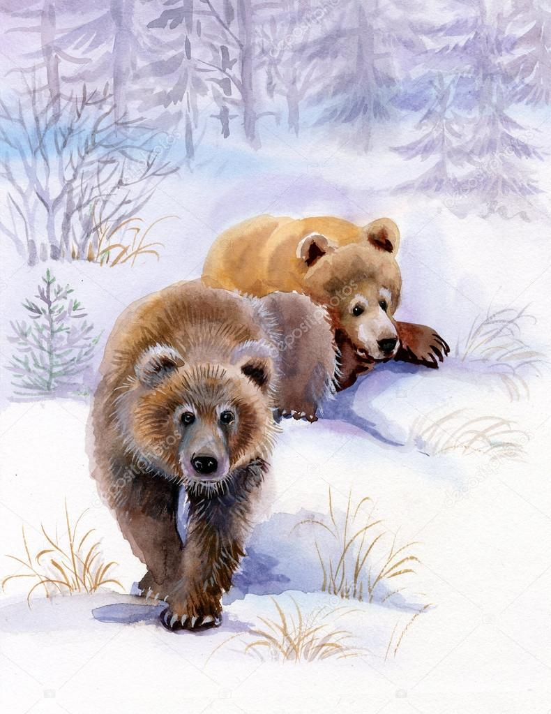 Brown bears in the snow