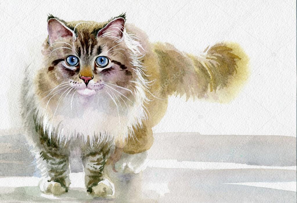 Visa Cat