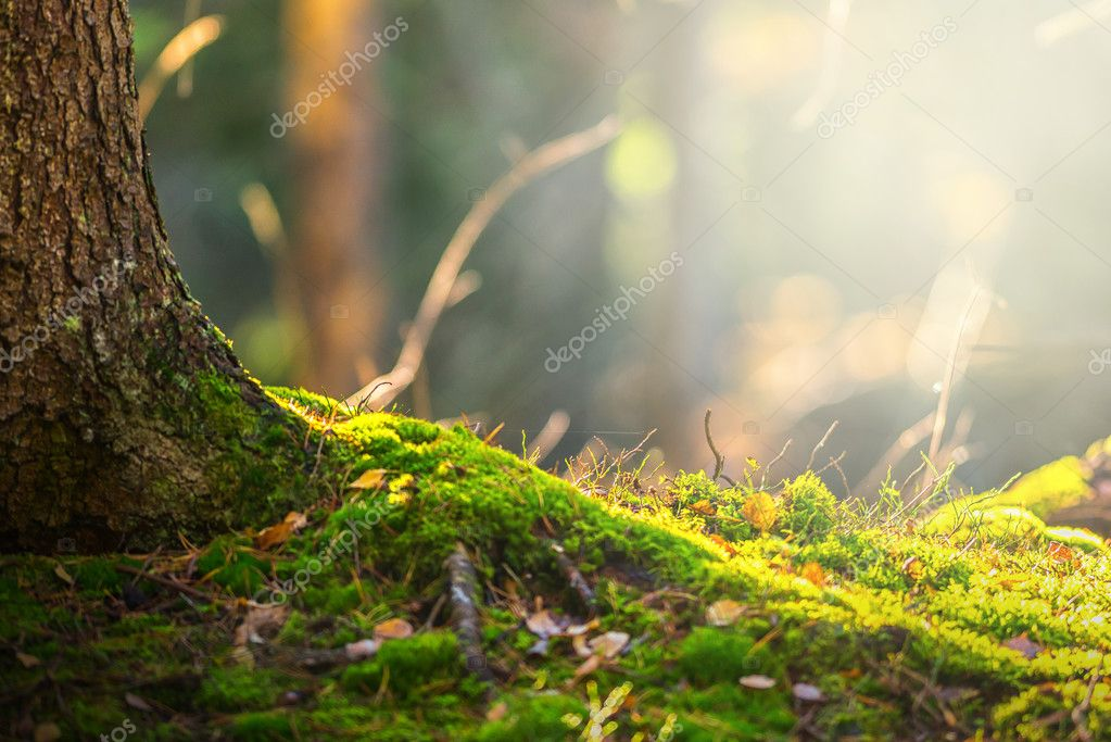 Фотообои Forest floor in autumn with ray of light