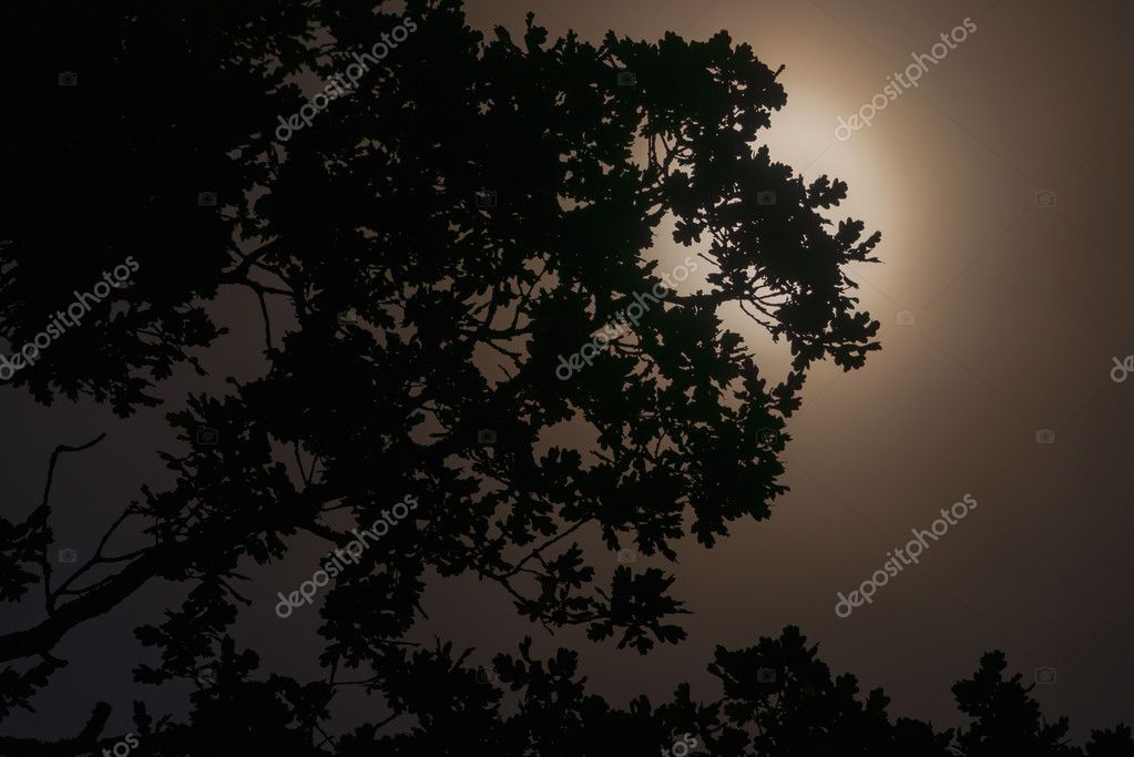The moon casts a silhouette on an old oak tree