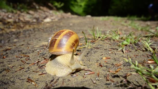 Beautiful Snail HD, wide angle, copyspace